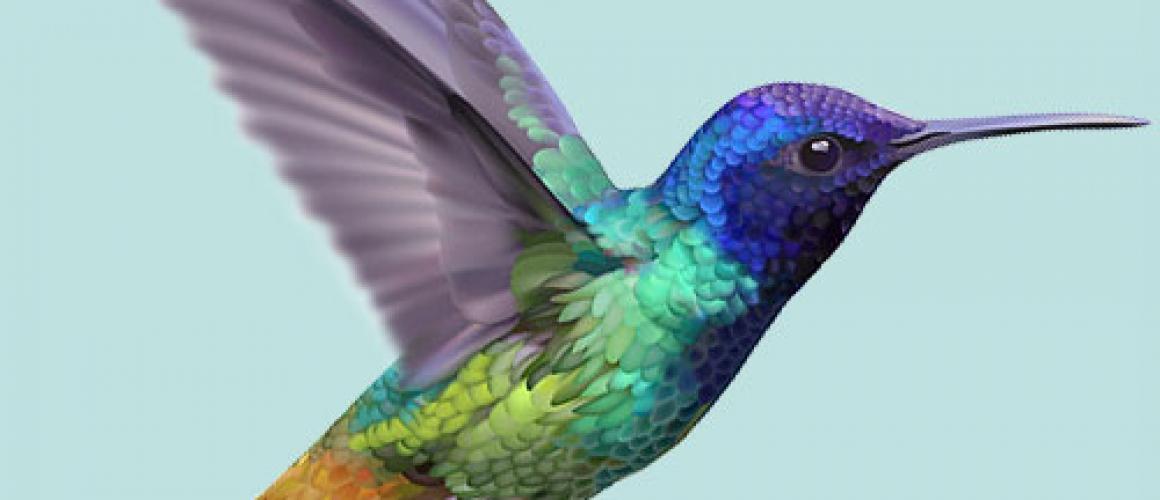 kolibrie_rechts